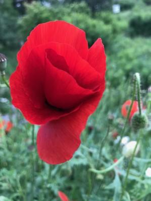 Dans les champs romands, la bataille des pesticides